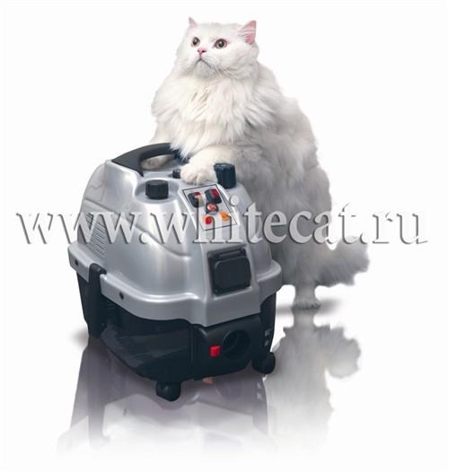Аквилон белый кот